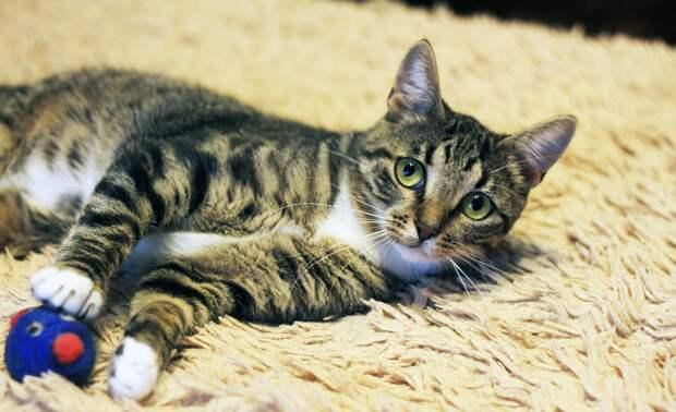 Этот котик является очень интеллигентным, культурным и воспитанным юношей. Поэтому забирайте его поскорее!
