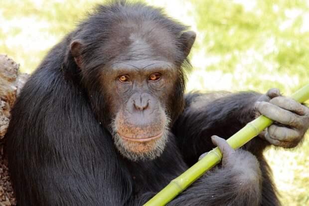 Топ-10 трагических случаев с экзотическими домашними животными