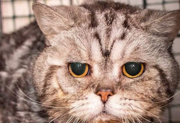История кота Спиридона — неделя без еды и воды и он выжил