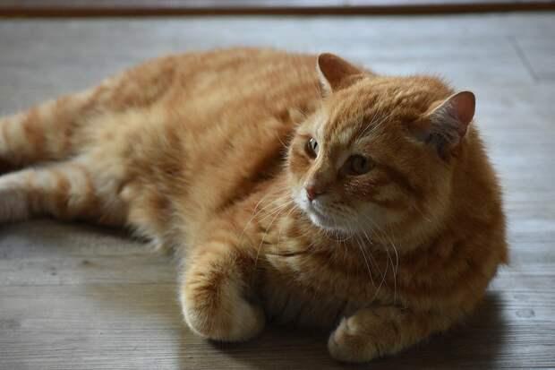 Соседи украли кота, пришлось побороться, чтобы вернуть