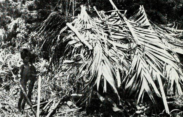 Афера века: зачем политик вынудил племя тасадай изображать дикарей и жить в пещерах