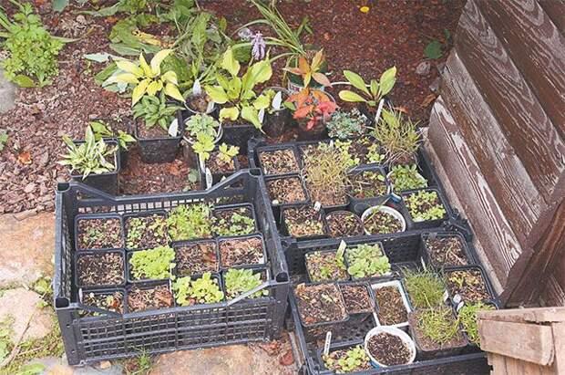 А у нас — посевная. Что нужно сделать до начала рассадного сезона?