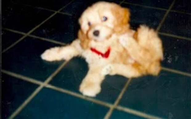 """""""Не может быть!"""" Девушка случайно встречает свою собаку, которую у нее отобрали 11 лет назад!"""