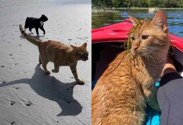 Котика взяли на пляж. Его отношение к прогулке написано на мордочке