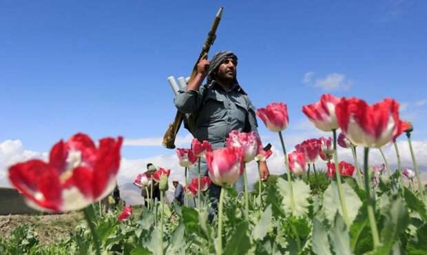 Боевики охраняют маковые поля в Афганистане