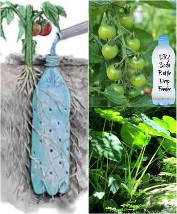 Возьмите на заметку: полезные советы для огородников