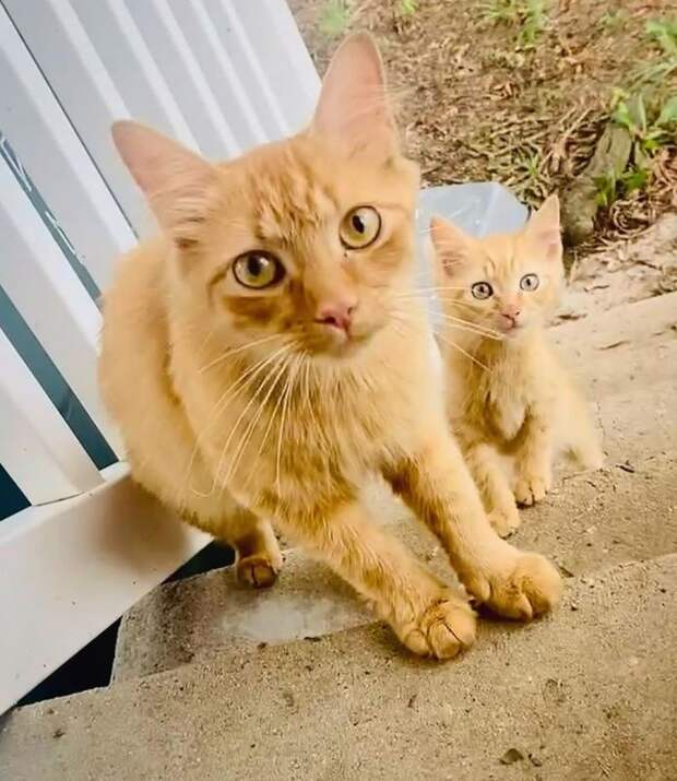 Кошка принесла своего котёнка семье, которой доверяла. А на следующий день – ещё одного