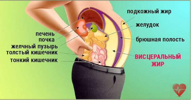 Избавляемся от опасного висцерального жира. Советы эндокринолога.