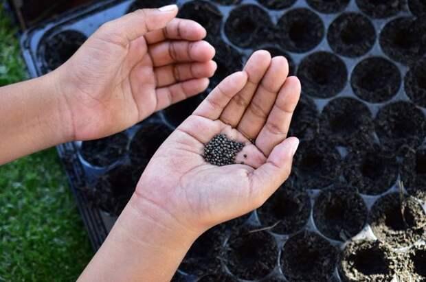 Процедуры для семян: готовим посевной материал правильно