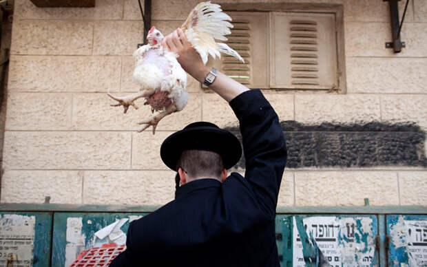 Еврей и курица