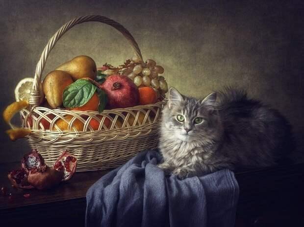 Никакой я не бездельник!) Кото-натюрморты Ирины Приходько