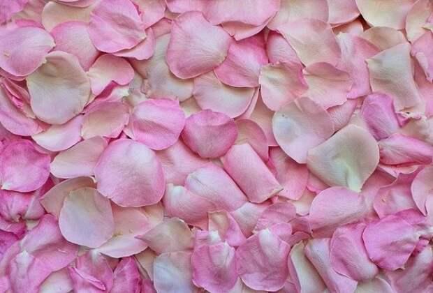 Значение розового и других цветов в психологии