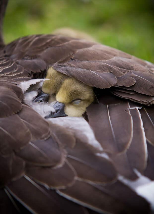 cute-bird-parents-38__700