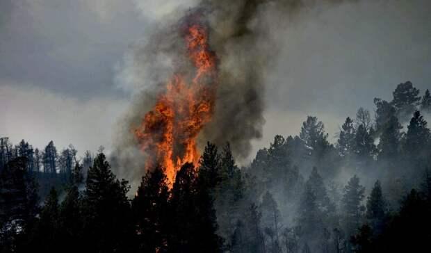 Площадь пожара взаповеднике «Денежкин камень» выросла почти в10 раз