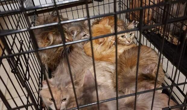Зоозащитникам удалось забрать 13 кошек изквартиры наулице Воровского вИжевске