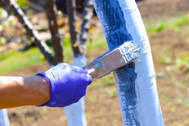Что добавить в побелку, чтобы защитить деревья от грызунов и болезней
