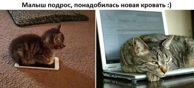 Возможно, это изображение (кот и текст «малыш подрос, понадобилась новая кровать :)»)