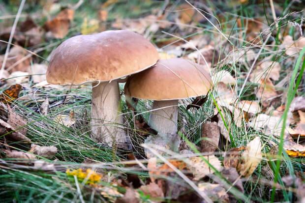 Новые правила сбора грибов