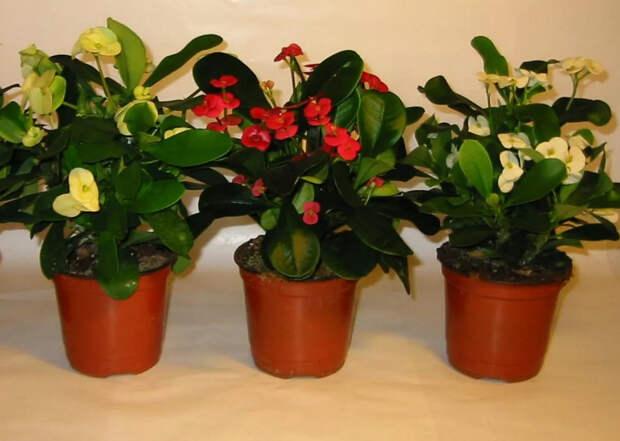 Флористы рекомендуют! 7 способов – комнатные цветы растут как на дрожжах...