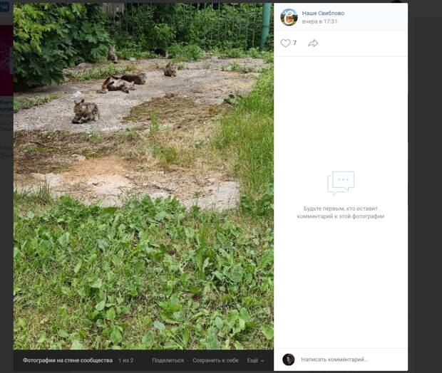Фото дня: во дворе на Русанова поселилось кошачье «племя»