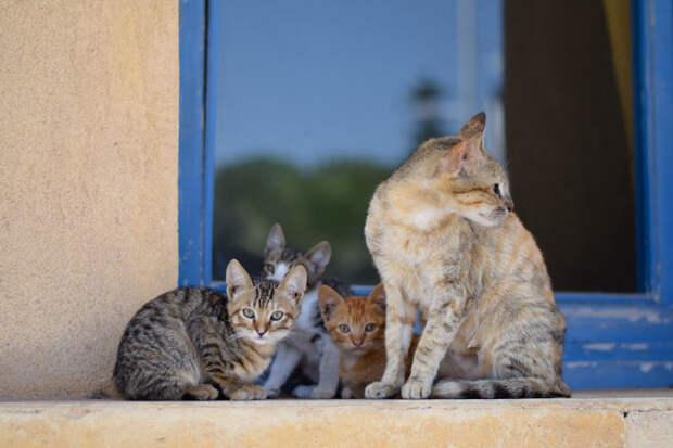 Семейный портрет Эс-Сувейра, город, животные, кот, марокко, проект, фотограф