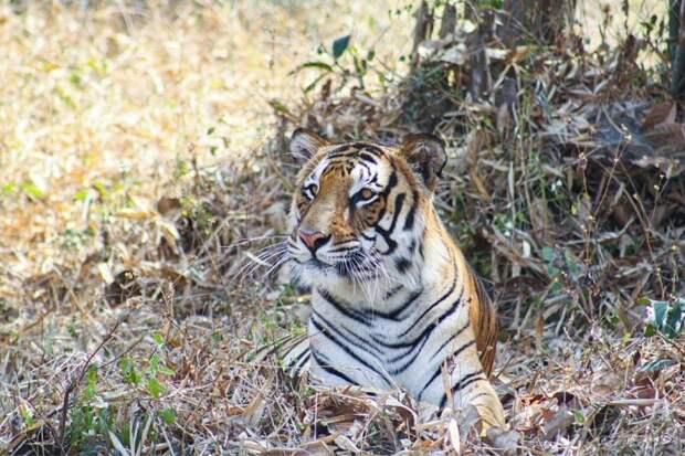 Вот зачем смейная пара 20 лет скупает земли около заповедника тигров
