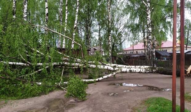 Последствия урагана: нижегородцы делятся кадрами падающих деревьев иразбитых машин