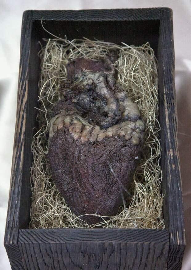 Сердце норвежского гиганта в дубовом руническом ларце V века