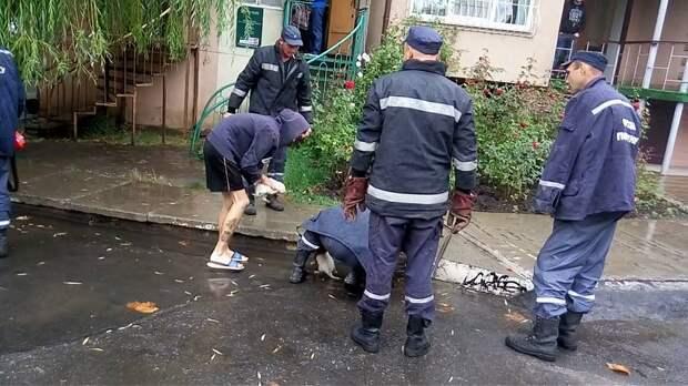 В Черноморске сотрудники ГСЧС спасли застрявших под тротуаром щенков