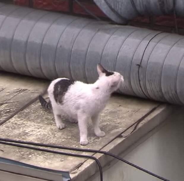 Люди заметили кошку, которая заглядывала в трубу. Они подошли и услышали истошный «плач», раздававшийся оттуда