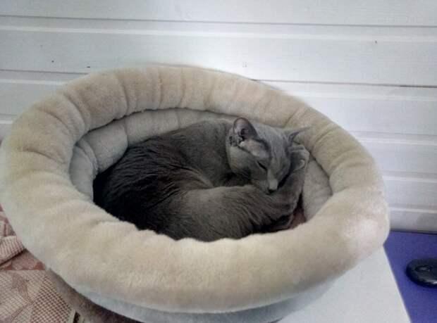 Кира в своей теплой лежанке