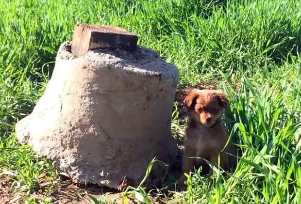 Волонтеры решили спасти щенка, но в итоге их ждал сюрприз