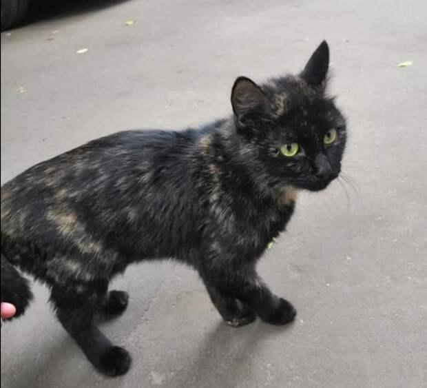 Выброшенная хозяевами на улицу кошка на Космодемьянских вновь обрела счастье