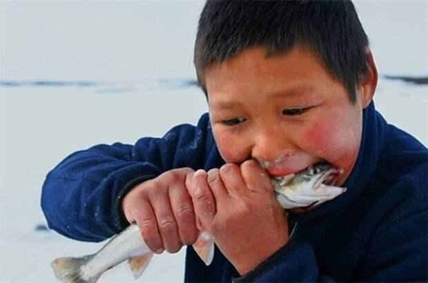 Сыроедение для народов крайнего севера, не дань модным ЗОЖ увлечениям, а суровая необходимость. Но благодаря такой диете зубы получают максимум необходимых минералов и остаются здоровыми. (фото из интернета)