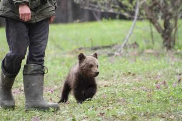 Жительница Тувы преодолела 4000 километров чтобы отвезти медвежонка в заповедник