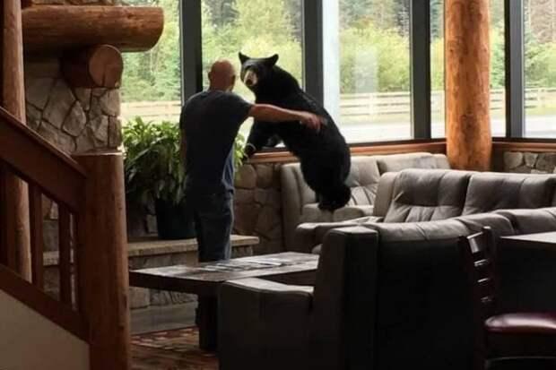 Медведь пробрался в дом