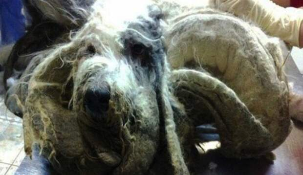 neglected-dog-1