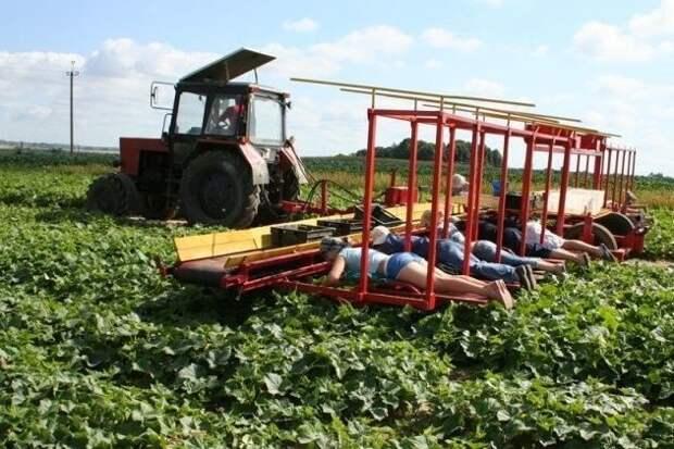 Попробуйте догадаться, чем заняты люди на этой фотографии дача, клубника, на заметку, огород, сбор урожая, фото