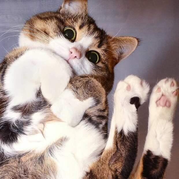 Куда бы ты ни шел, я всегда с тобой! котики, коты, милота, мотики, сквозь стекло