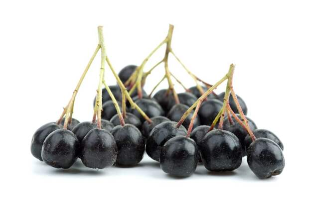 Чем полезна черноплодная рябина и как правильно ее есть