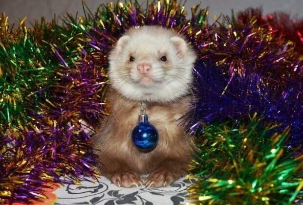 Хоть одну то снимите животные, не любят, новый год, планы, смешные, фото