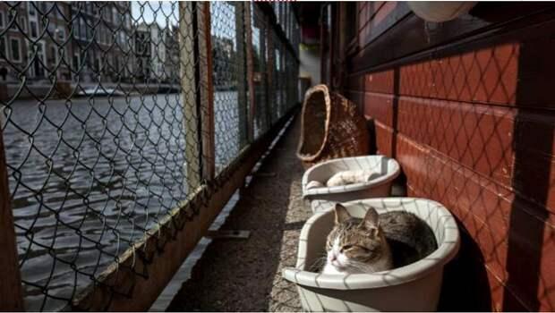 Как выглядит единственный в мире плавучий приют для кошек