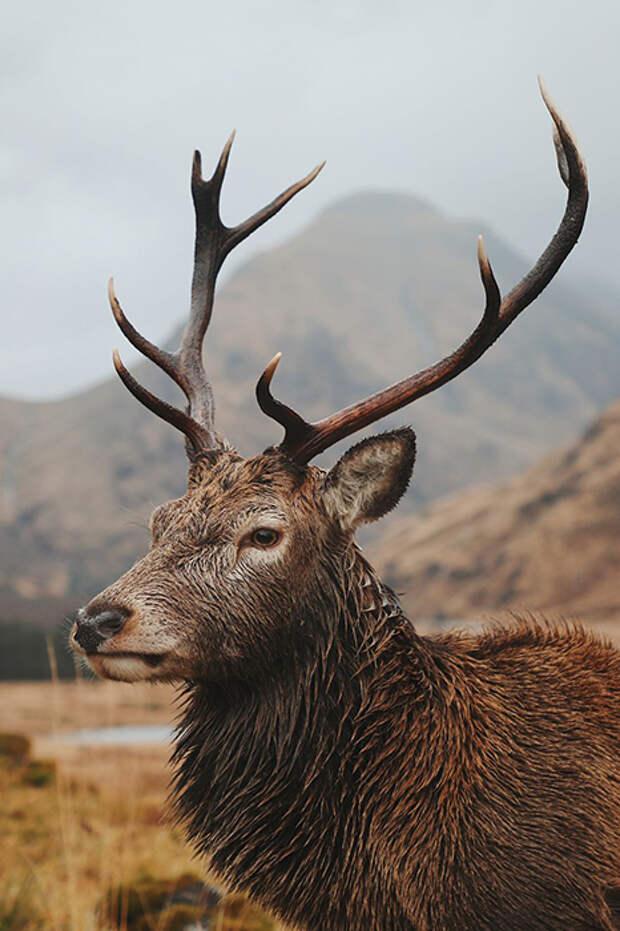 Шотландия, Великобритания.