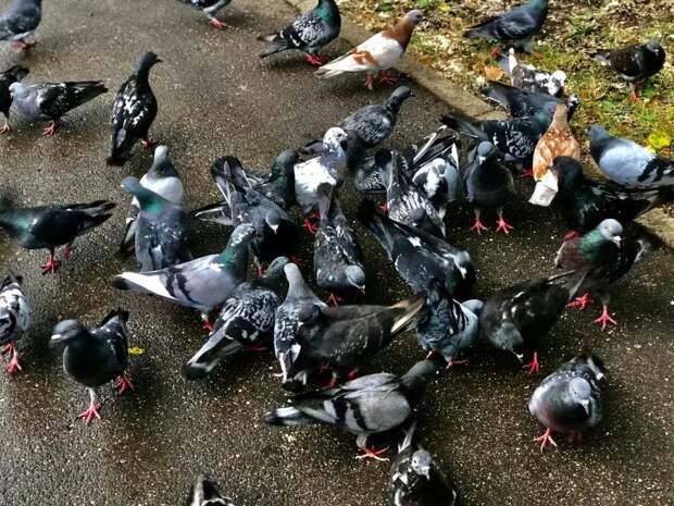 Фото дня: голуби захватили Северный
