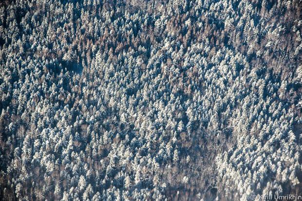 Подмосковные леса стоят под снегом