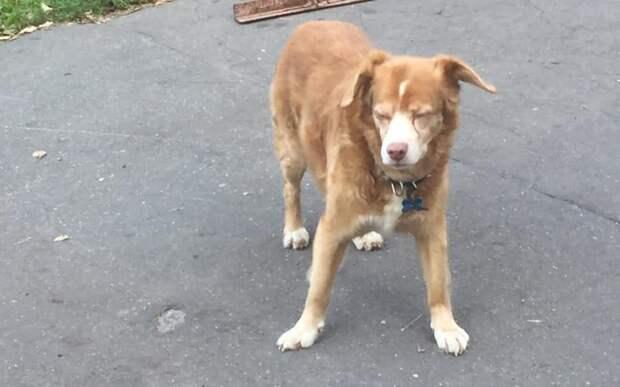 На Живописной разыскивают хозяев слепой собаки