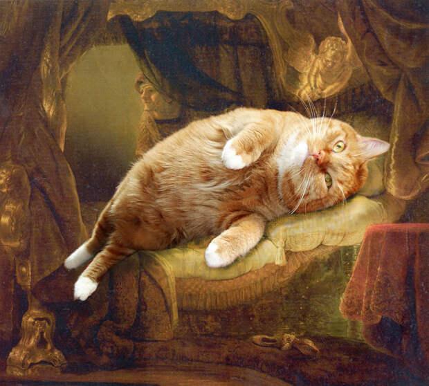 Кот и золотой дождь