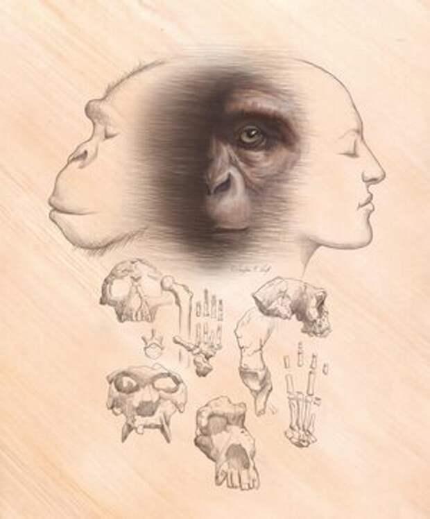 Большинство теорий происхождения человека несовместимы с известными окаменелостями