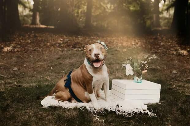 Беременная собака попала в приют, но зоозащитники спасли её и сделали моделью