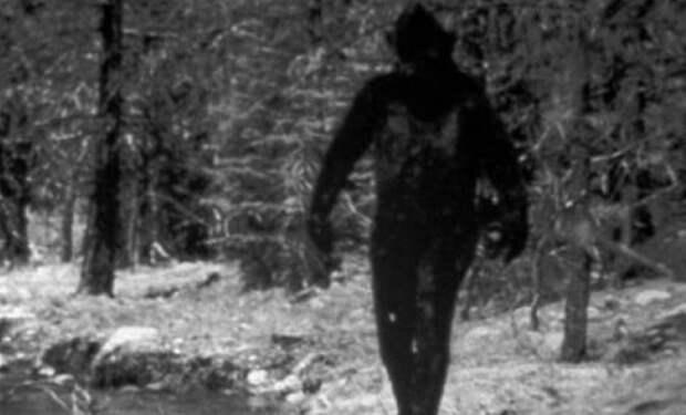 Жуткая находка криптозоологов: снежный человек попал на фотоловушку